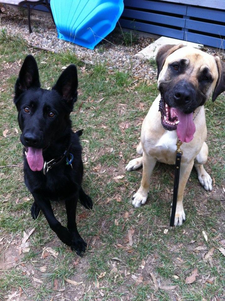 Jetta and Georgie